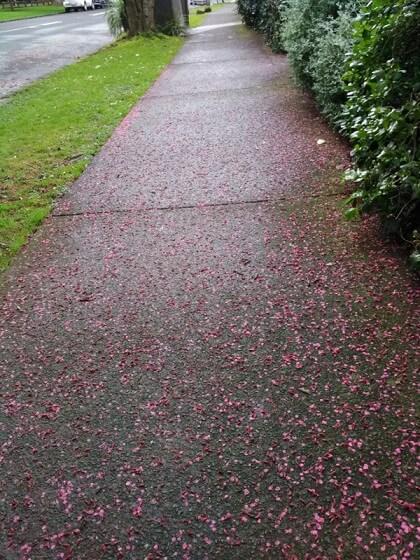 道端に落ちていた沢山の花