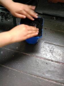種を植えて土をかぶせます