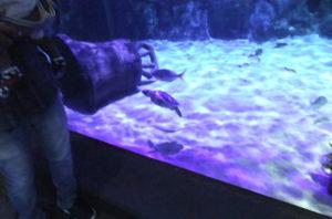 子ウミガメ