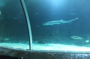 サメも気持ちよさそうです